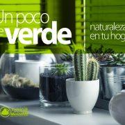Un Poco de Verde - Tips Patricia Merizalde